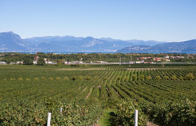 A Garda-tó déli partján terülnek el a Turbiana szőlőültetvények.