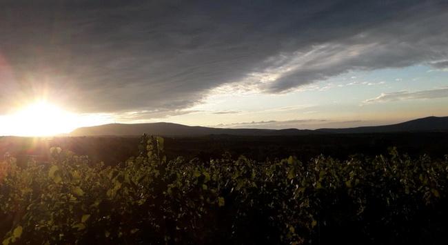René's Wine Heaven. Juhász René, a tehetséges mátrai borvidéki borász mélyinterjúnk alanya. GasztroMagazin 2019.