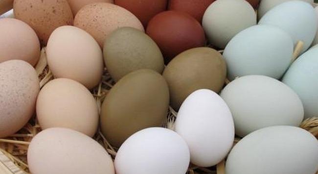 Omega-3 tartalmú tojásokat tojó tyúkokat tenyésztenek a gödöllői Szent István Egyetemen. GasztroMagazin 2020.